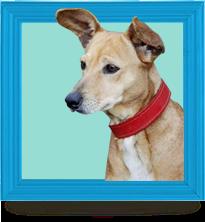 Animais do SOS para adoção