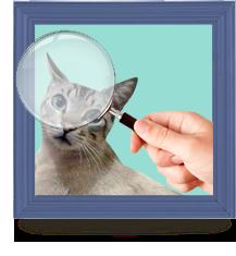 Gatos desaparecidos/perdidos